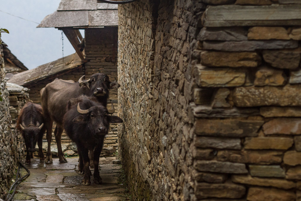 The streets of Ghandruk